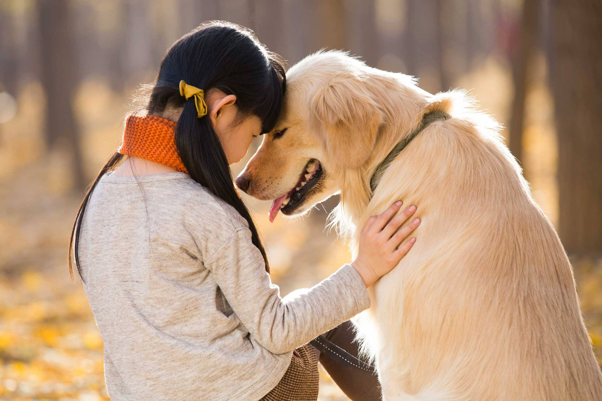 humans and animals relationships Psychological relationship between humans and animals whether its social, business, or personal, animals play an extremely important role in the lives of humans humans have been using animals to survive since before 100 bc.