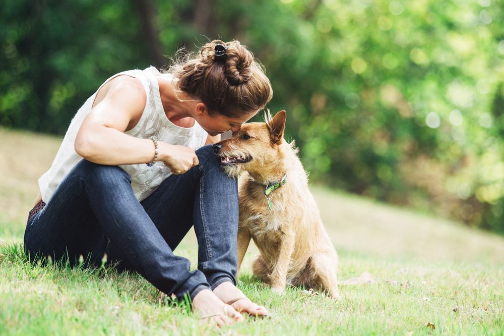 soul healing with our animal companions the hidden keys to a deeper animalhuman connection